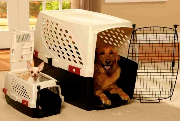 jaulas-para-perros-1