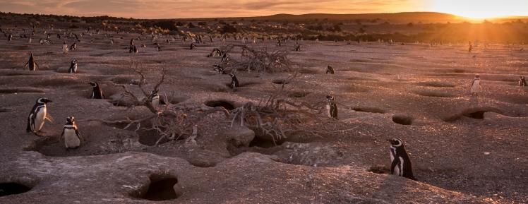 patagonia1 - copia